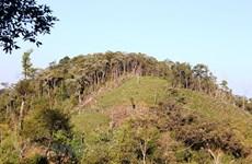 Sớm hoàn thành cắm mốc giới lâm phận với rừng đặc dụng, phòng hộ