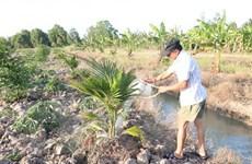 Nước mặn bủa vây Đồng bằng sông Cửu Long: Gồng mình chống chọi
