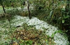 Điện Biên: Gió mạnh, mưa đá gây nhiều thiệt hại về nhà cửa và hoa màu