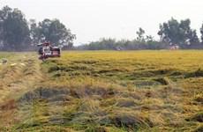 Ứng phó hiệu quả với hạn mặn, nông dân Kiên Giang được mùa