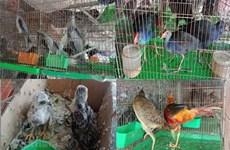 Bảo vệ các loài nguy cấp có ý nghĩa toàn cầu tại Việt Nam
