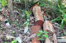 Vụ mở đường để phá rừng ở Phú Yên: Chuyển hồ sơ sang cơ quan điều tra