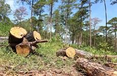 Quyết liệt các giải pháp ngăn chặn tình trạng mất rừng tự nhiên