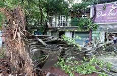 Mưa dông gây hư hại nhà cửa, hệ thống điện ở Thừa Thiên-Huế
