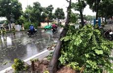 Hà Nội ứng phó với nguy cơ gãy đổ cây xanh trong mùa mưa bão
