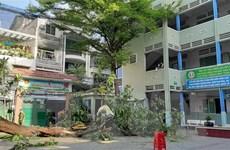 TP.HCM ứng phó với nguy cơ cây xanh gãy đổ trong mùa mưa