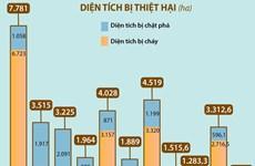 [Infographics] Điểm lại diện tích rừng bị thiệt hại trong 10 năm qua