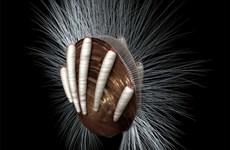 Phát hiện ký sinh trùng trong hóa thạch 512 triệu năm tuổi