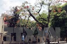 Nhiều sáng kiến chăm sóc và bảo vệ cây xanh trong trường học