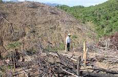 Thừa Thiên-Huế: Khởi tố vụ án hủy hoại rừng tại thị xã Hương Trà