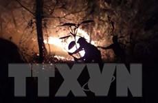 Hà Tĩnh: Cháy rừng ở Hương Sơn có thể do người dân thắp hương