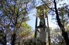 Nghệ An: Khởi tố hình sự và xử lý hành chính 8 vụ cháy rừng