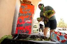 'Tủ lạnh cộng đồng' cung cấp đồ ăn miễn phí trong thời dịch COVID-19