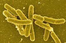 Mỹ điều tra đợt bùng phát các ca nhiễm khuẩn Salmonella Newport