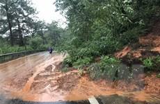 Mưa to trong nhiều giờ gây sạt lở, đổ cây tại thành phố Đà Lạt