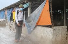 Tái phát bệnh cúm H5N1, Trà Vinh tiêu hủy hơn 1.000 con gia cầm