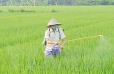 Hai nhóm giải pháp đảm bảo cung ứng đủ lương thực, thực phẩm