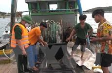 Quảng Bình xử lý hai tàu cá đánh bắt thủy hải sản sai tuyến