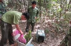 Việt Nam có những bước tiến mạnh mẽ trong bảo tồn đa dạng sinh học