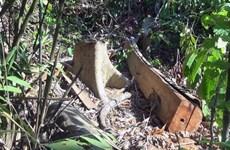 Vụ mở đường để phá rừng giáp ranh: Quy mô thực tế lớn hơn báo cáo