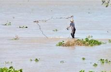 Thú vị nghề đẩy lưới, xúc rận nước ở Đồng Tháp trong mùa nước nổi