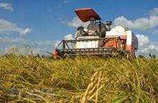 Thị trường nông sản tuần qua: Giá lúa ở mức cao, giá càphê giảm mạnh