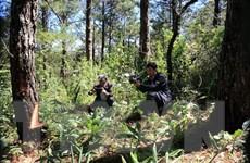 Điều tra vụ đầu độc thông rừng trong Vườn Quốc gia Bidoup-Núi Bà