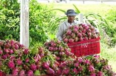 Được bảo hộ chỉ dẫn địa lý, thanh long Bình Thuận mở rộng thị trường
