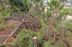 Lâm Đồng: Xử lý nghiêm đối tượng lấn chiếm, phá rừng tại Đức Trọng