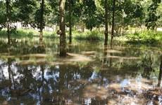 Chủ bãi đãi cát hoạt động 'chui' từng bị phạt gần 180 triệu đồng
