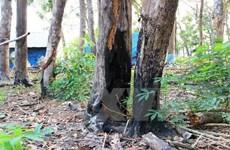 Xử phạt 2 cá nhân lấn chiếm đất rừng để dựng nhà, chuồng trại