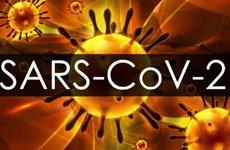 Thụy Sĩ: Nghiên cứu cơ chế virus SARS-CoV-2 gây cục máu đông