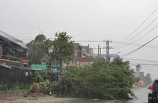 Bình Định: 19 người bị thương, hàng nghìn ngôi nhà bị tốc mái