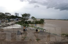 Quảng Ngãi: Giải cứu gần 20 công nhân mắc kẹt giữa dòng sông Trà Khúc