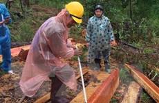 Lâm Đồng: Phát hiện thêm một vụ phá rừng thông nghiêm trọng ở Đam Rông