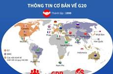 [Infographics] Việt Nam đóng góp tích cực vào các hoạt động của G20