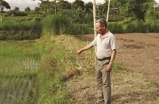 Yên Bái: Xử lý dứt điểm ô nhiễm môi trường tại trại chăn nuôi lợn