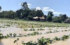 Mưa lũ tại Đắk Lắk khiến một người chết, một người mất tích