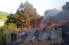 Quảng Ninh: Giải quyết tình trạng tranh chấp đất rừng ở đảo Vĩnh Thực