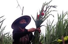 Thủ tướng chỉ thị không để người dân thiếu ăn trong dịp Tết