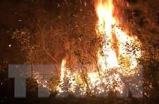 Hà Nội: 7,3ha rừng bị thiệt hại trong vụ cháy tại huyện Sóc Sơn