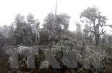 Điện Biên: Băng tuyết xuất hiện, phủ trắng đỉnh núi Khoan La San