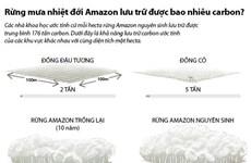 [Infographics] Rừng mưa nhiệt đới Amazon lưu trữ bao nhiêu carbon?