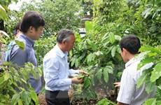 Phát triển nông nghiệp hữu cơ ở Viêt Nam: Xây dựng chiến lược dài hạn