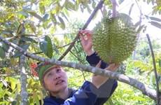 Phát triển nông nghiệp hữu cơ: Chưa tạo được giá trị tương xứng