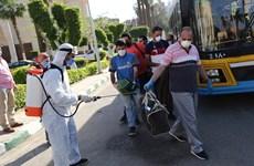 Ai Cập ưu tiên tiêm vắcxin ngừa COVID-19 cho người cao tuổi
