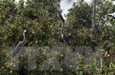 'Ngôi nhà thứ hai' của động vật hoang dã ở Vườn Quốc gia U Minh Thượng