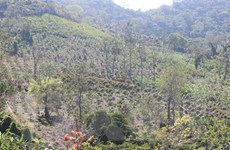 Khánh Hòa: Làm rõ, xử lý vụ phá rừng trên địa bàn xã Suối Tân