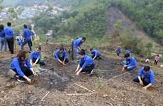 Tuổi trẻ TTXVN trao tặng 10.000 cây xanh để trồng tại Hòa Bình