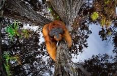 Ấn tượng các tác phẩm đoạt giải nhiếp ảnh thiên nhiên thế giới 2020